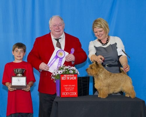 Paulo (GCH Apollo) was the #1 AKC Norwich terrier in 2013.