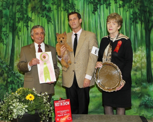 Bonnie's awarded Best Beginner Puppy in Show